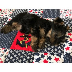 Hundematte - Patchwork/Maritim